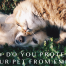 How Do You Protect Your Pet From EMF?